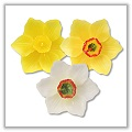 "Daffodil Blossom Floating Candles - 2"" x 1"" - (Set of 3) bpi-983bpsml"