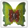 Double Butterfly Floating Pool Candles - Green