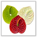 Anthurium Floating Candles - Green, Red, Yellow - Boxed Set of 3 bpi-207bp00