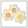Daffodil Floating Candles 2 inches - (Set of 3) a-fl-m-daffodil