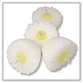 Daisy Blossom Floating Candles 2 inches - white a-fl-daisy-s